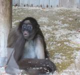 Free Photo - Monkey in captivity
