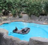 Free Photo - Seal family in the Barcelona Zoo