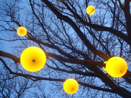 Lamps on a tree - Free Stock Photo