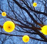 Free Photo - Lamps on a tree