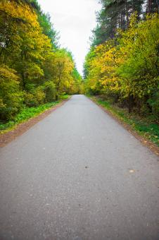road in the forest - Free Stock Photo