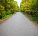 Free Photo - road in the forest