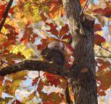 Free Photo - Squirrel in a fall tree