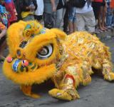 Free Photo - Yellow dragon in action
