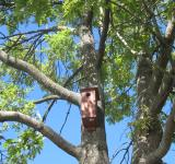 Free Photo - A birdhouse on a tree
