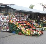 Free Photo - A flower shop
