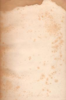 Paper Texture - Foxing Stains - Free Stock Photo
