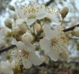 Free Photo - Spring blossoms