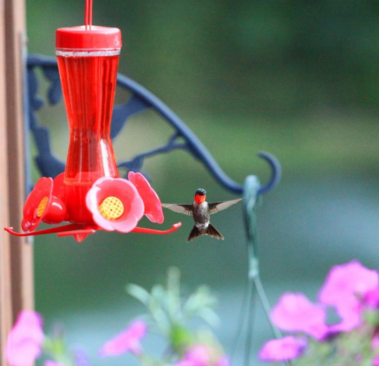 Free Stock Photo of Hummingbird Cross Created by Tim Fitch