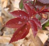 Free Photo - Rain drops on rose leafs