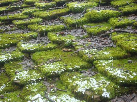 Moss covered rooftop - Free Stock Photo