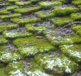 Free Photo - Moss covered rooftop
