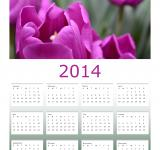 Free Photo - Purple Tulips 2014 Calendar