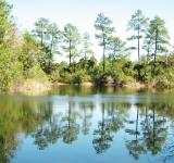 Free Photo - Reflections In Lake Water
