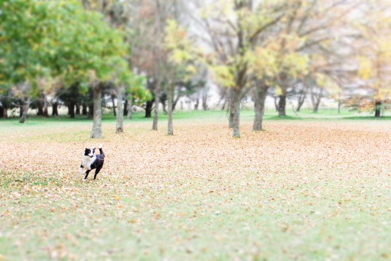 Free Stock Photo of Dog in the park Created by Atu