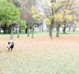 Free Photo - Dog in the park