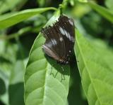 Free Photo - Butterfly on the Green Leaf