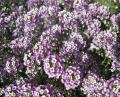 Free Photo - Purple flowers wallpaper
