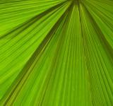 Free Photo - Palm Leaf Background