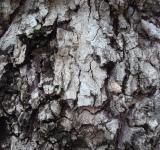 Free Photo - Grunge old bark