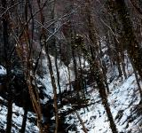 Free Photo - Creek in the winter