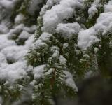 Free Photo - Trees under the snow