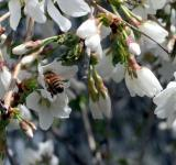 Free Photo - Spring Bee