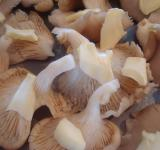 Free Photo - Raw mushrooms with butter
