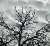 Free Photo - Sinister tree branches