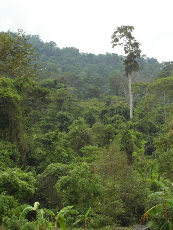 Free Stock Photo of Jungle / Tropical Rainforest Created by Ivan