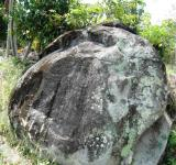 Free Photo - Large Boulder in the Rainforest