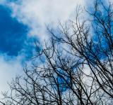 Free Photo - Skies and treetops
