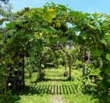 Free Photo - Garden Path Archway