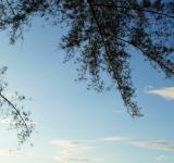 Free Photo - Sky and Branches