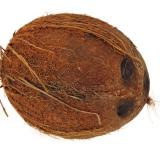Free Photo - Coconut