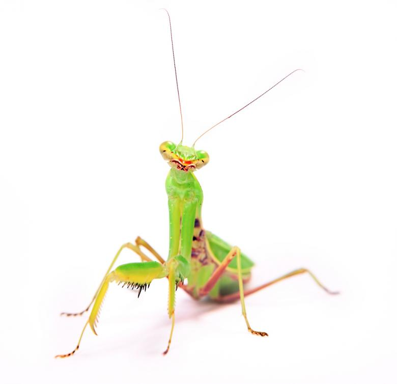 Free Stock Photo of Praying Mantis Created by 2happy