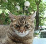 Free Photo - Domestic cat
