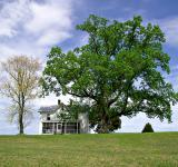 Free Photo - White House on a Hill at Springtime