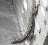 Free Photo - Gecko Lizard