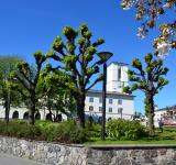 Free Photo - Linden trees in Oslo