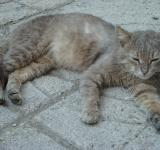 Free Photo - Urban cat resting