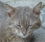 Free Photo - Urban cat sleeping