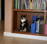 Free Photo - Cat Bookworm