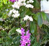 Free Photo - White and purple orchid