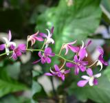 Free Photo - Purple Orchid