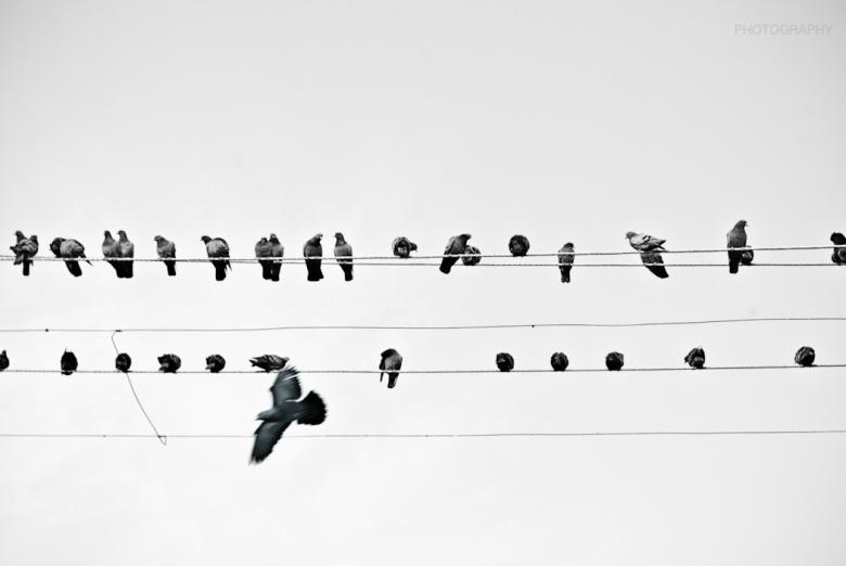 Free Stock Photo of Birds on the Wire Created by infectedgallery