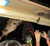 Free Photo - Night safari Chiang Mai