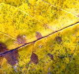 Free Photo - Autumn leaf