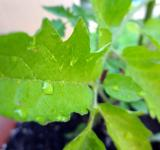 Free Photo - Raindrop leaf