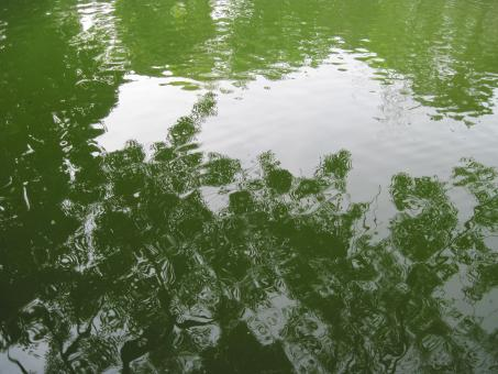 Water surface - Free Stock Photo